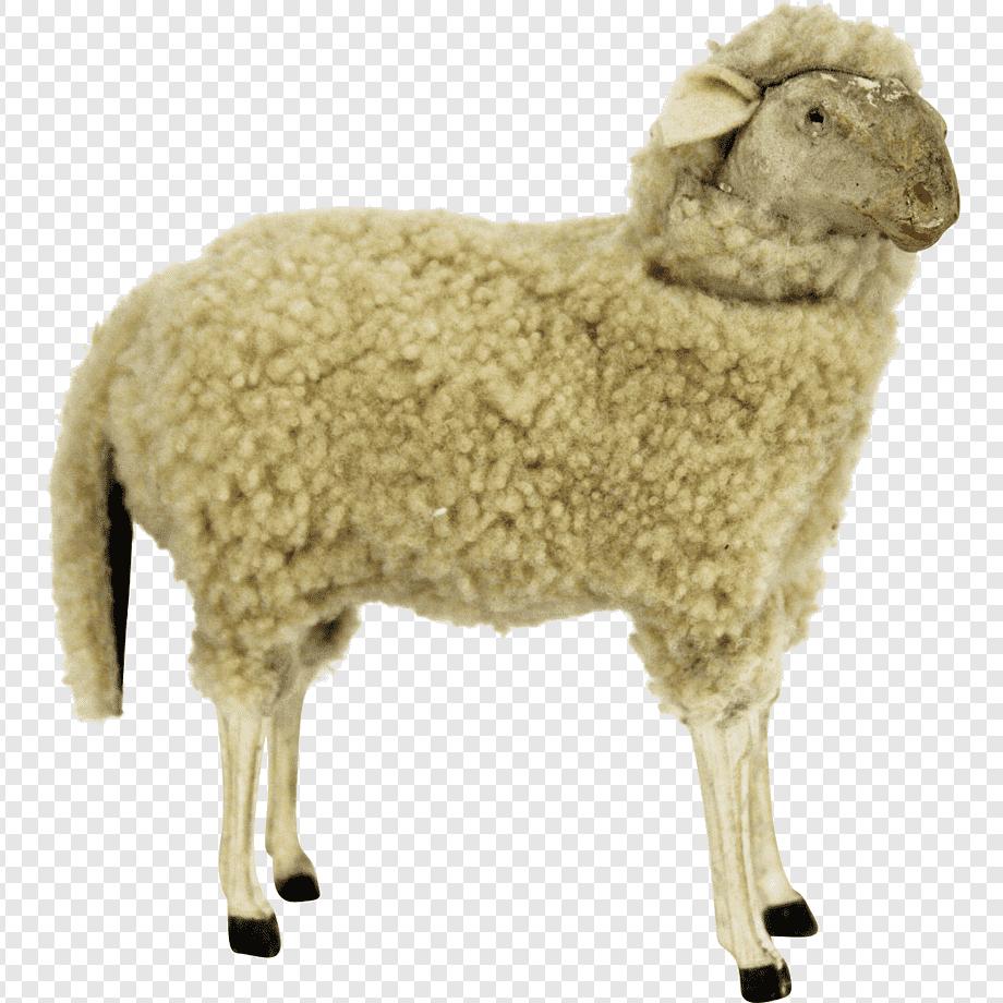 Domba Kambing Wol Hewan Darat, Domba, Hewan, Sapi Keluarga intended for Gambar Domba Png