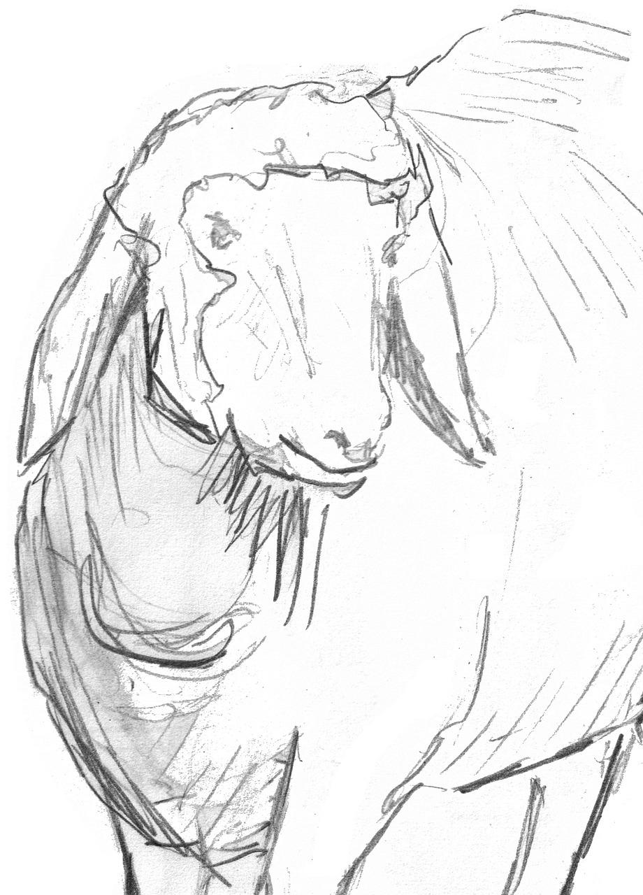 Domba Sketsa Menggambar Pensil - Gambar Gratis Di Pixabay within Gambar Domba Sketsa