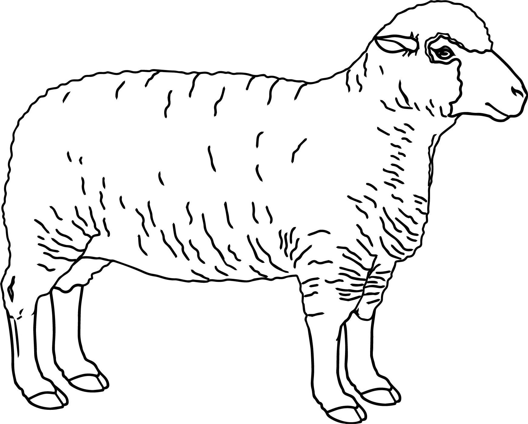 √14+ Gambar Mewarnai Domba Untuk Tk, Paud, Sd inside Gambar Domba Sketsa