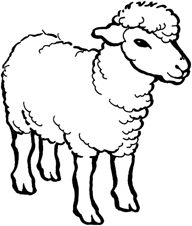 √14+ Gambar Mewarnai Domba Untuk Tk, Paud, Sd pertaining to Gambar Domba Lucu