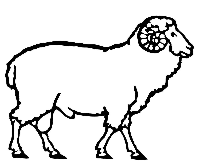 √14+ Gambar Mewarnai Domba Untuk Tk, Paud, Sd pertaining to Gambar Domba Mewarnai