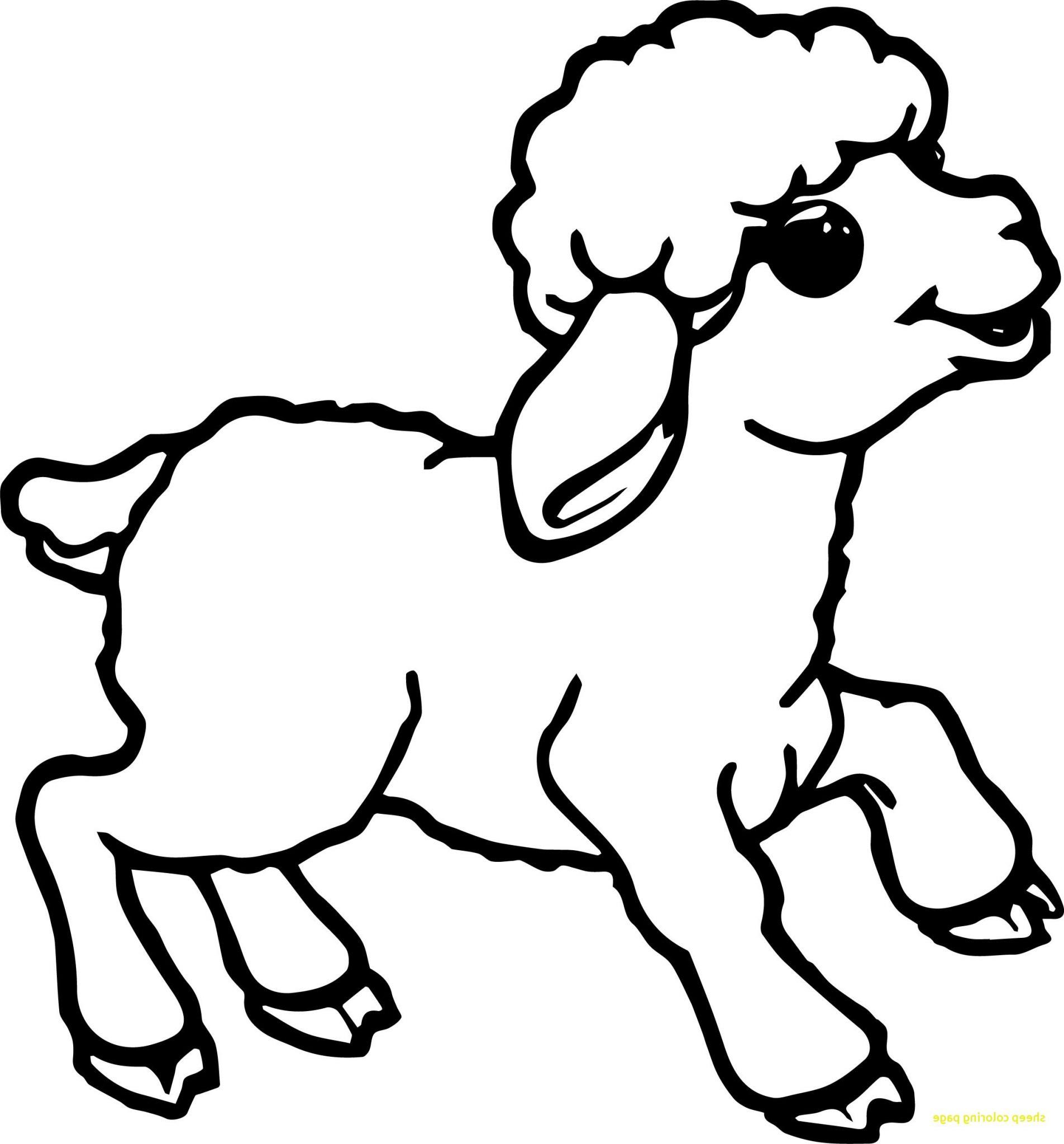 Gambar Domba Kartun Berwarna   Tentang Kolam Kandang Ternak pertaining to Gambar Domba Animasi