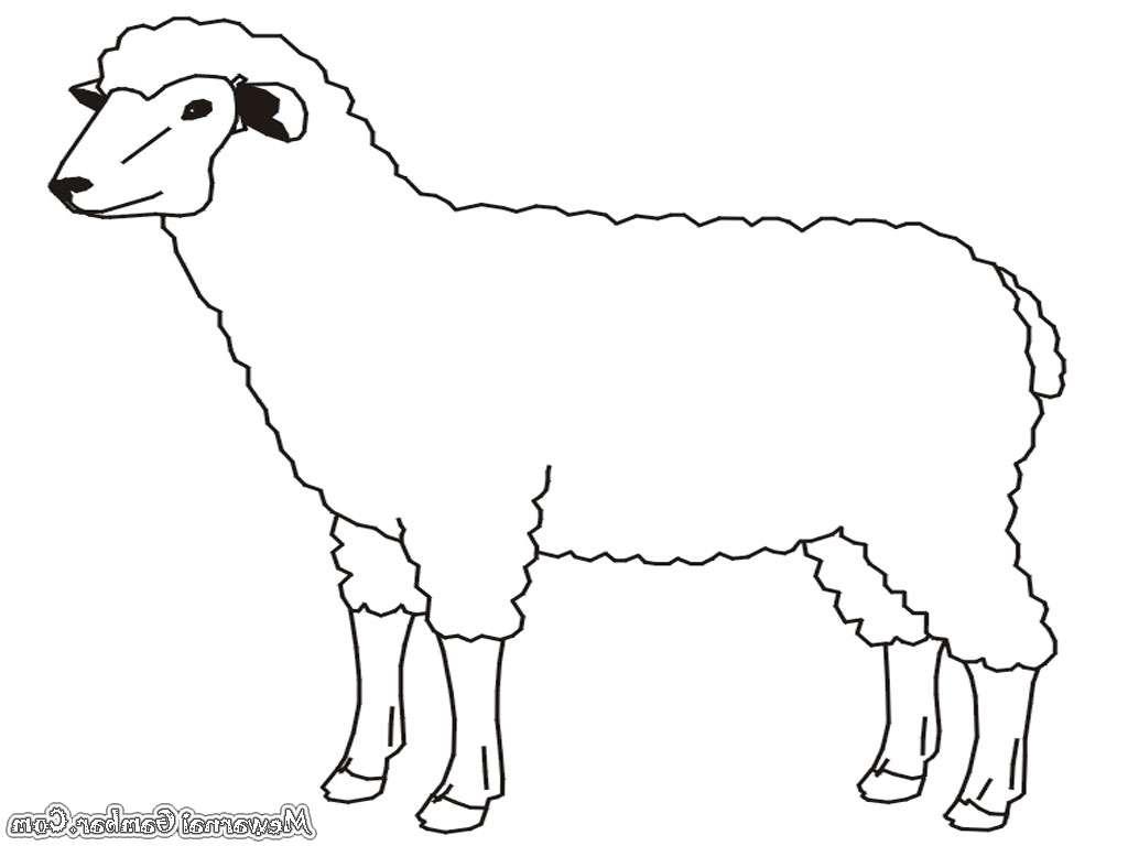 Gambar Kambing Untuk Mewarnai regarding Gambar Domba Mewarnai