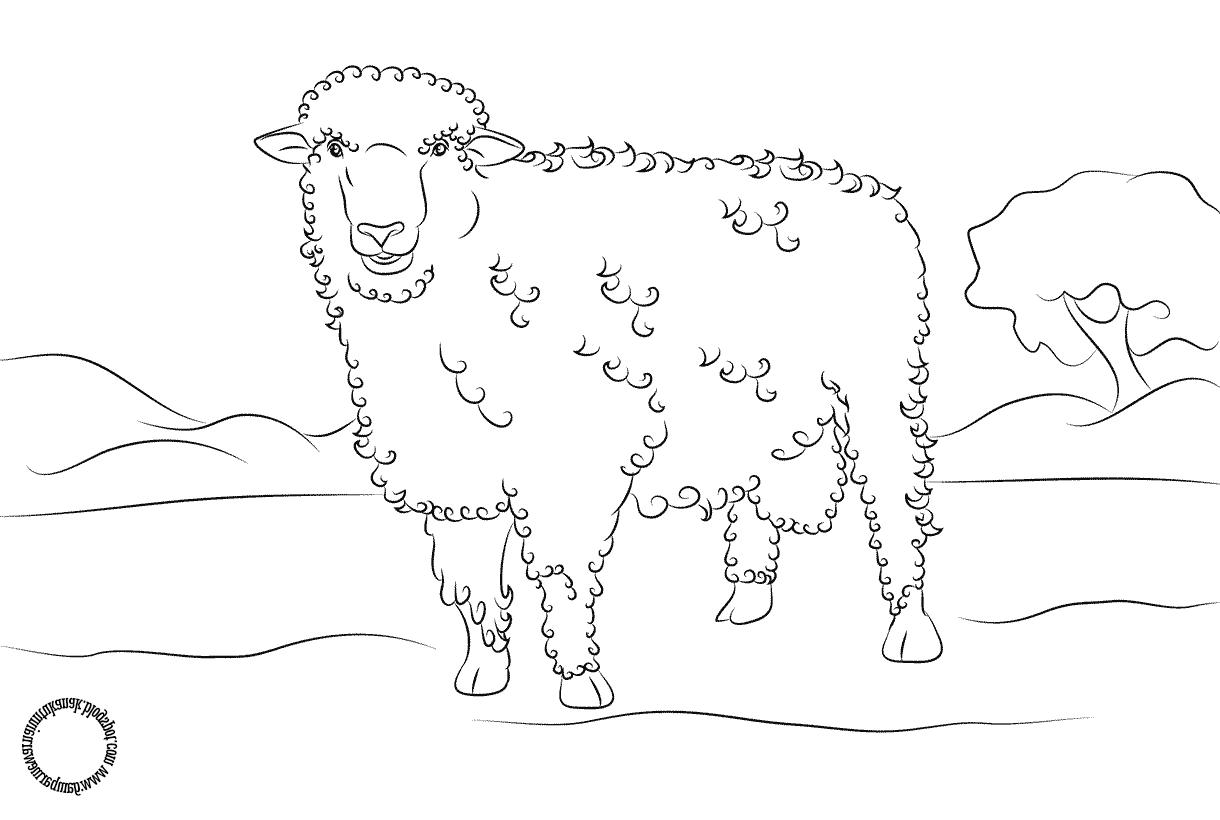 Gambar Mewarnai Untuk Anak: Gambar Di Atas Adalah Gambar pertaining to Gambar Domba Untuk Mewarnai