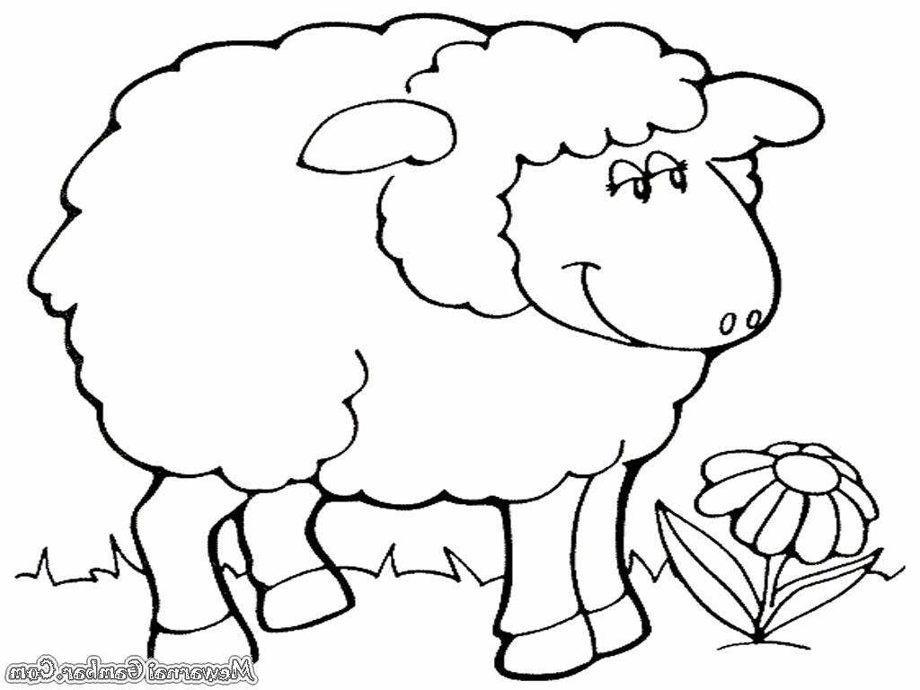Gambar Untuk Mewarnai Domba throughout Gambar Domba Sketsa