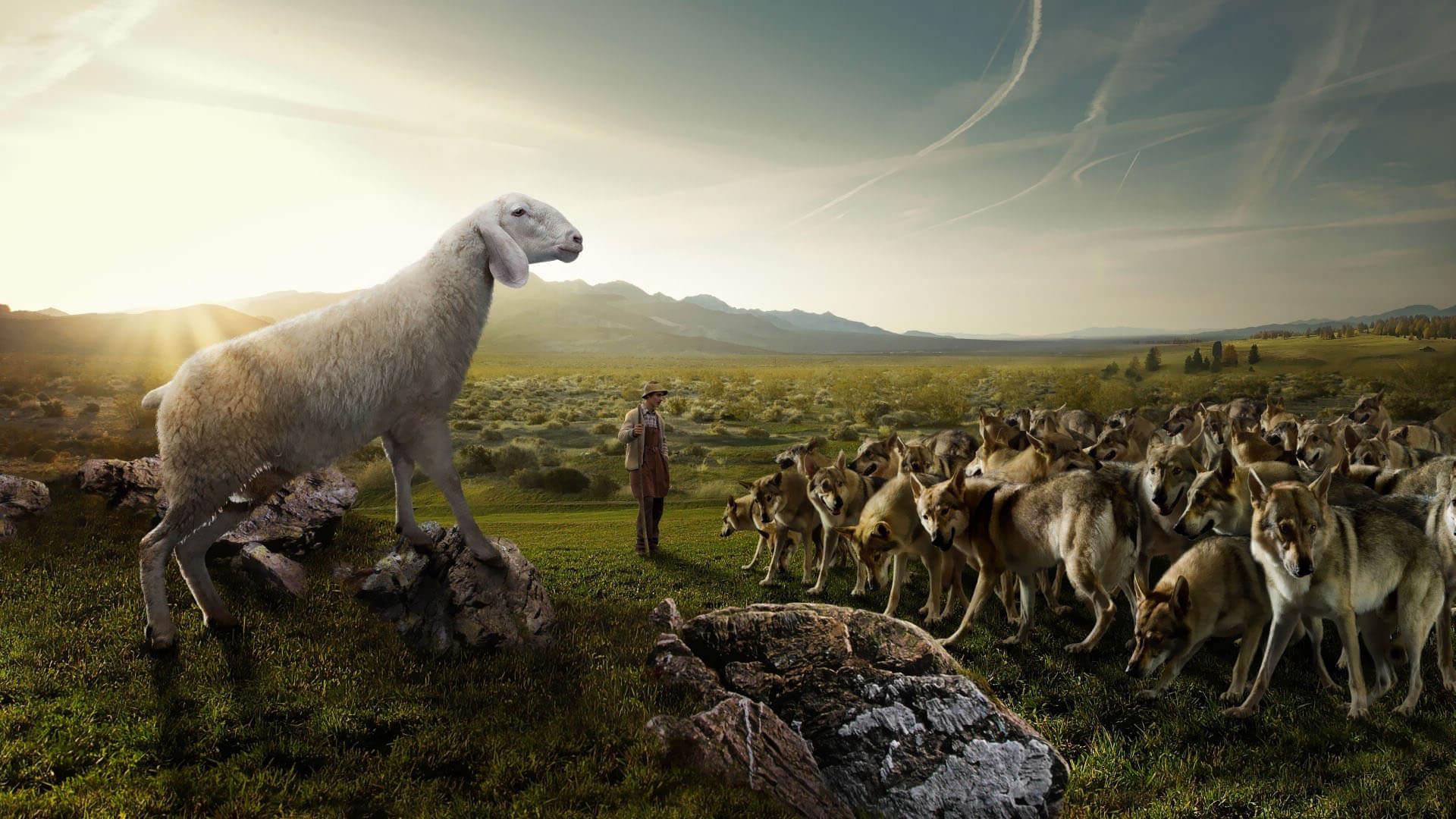 """Hari Biasa, Minggu Biasa Xxviii. """"Sesungguhnya Aku Mengutus with Gambar Domba Banyak"""
