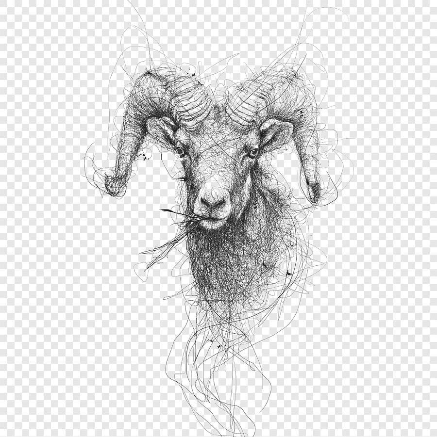 Kambing Sketsa, Kambing Yang Dilukis Dengan Tangan, Garis inside Gambar Domba Sketsa
